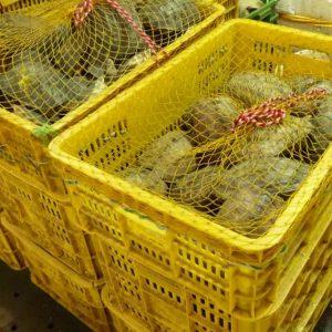 Des caisses de tortues au marché aux poissons et fruits de mer.