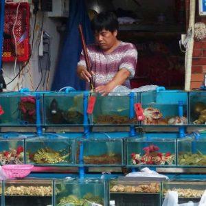 Un étal du marché aux poissons