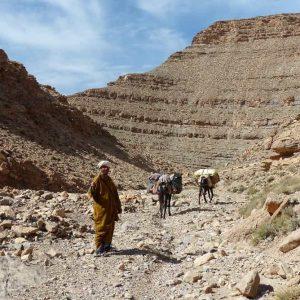 Daoud, qui assure le portage avec 2 mulets