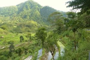 Une rizière à Bali