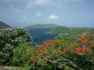 Croisière Nord Caraibes - Les Saintes (r26)