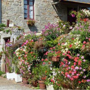 Maison fleurie à Piriac