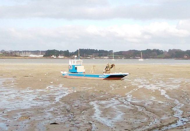 Une plate échouée sur le sable à marée basse