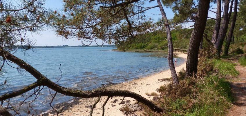 Petite plage sur la ria d'Etel à Locoal