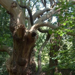 La Forest à Locoal-Mendon