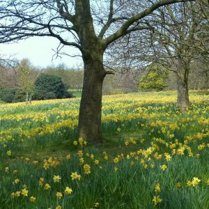 The Fields of Hope à Sefton Park Liverpool