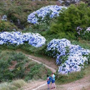 Belle Ile en Mer - Des randonneuses admirent les massifs d'hortensias