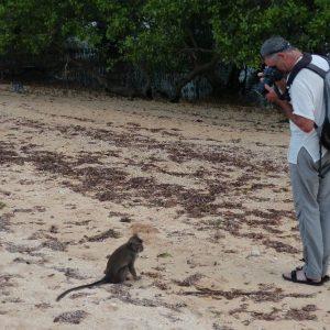Sur la plage de Kuta, les  singes se laissent facilement photographier