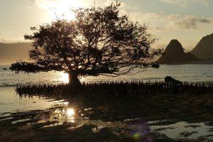 Arbre en contre-jour au coucher de soleil sur la plage de Kuta Lombok