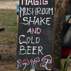 Les fameux champignons magiques qui échappent par erreur aux lois sur les stupéfiants