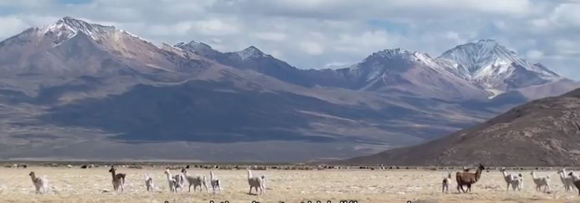 Les Uru-Chipayas en Bolivie