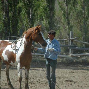 A la rencontre des Gauchos de Patagonie