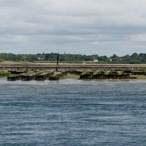 Des parcs à huitres sur le Golfe du Morbihan