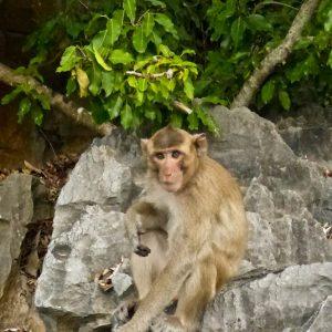 Les habitants de Monkey Island