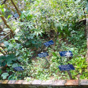 Plantes médicinales au Jardin de Abeilles